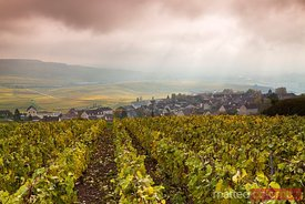 Vineyards in autumn, Champagne, France