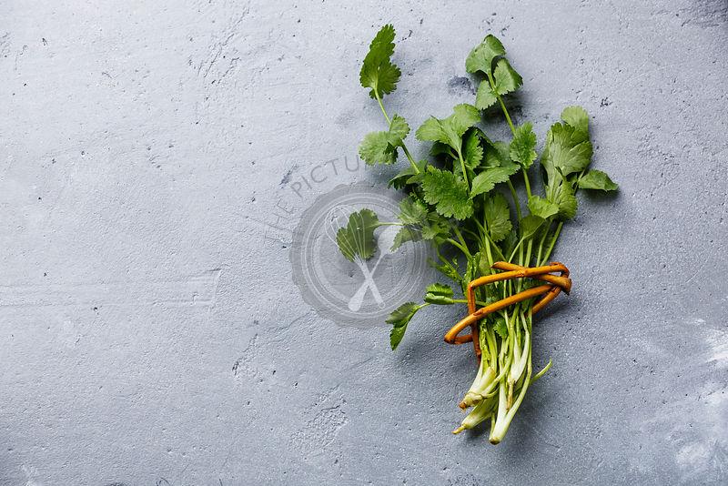 Fresh coriander bunch leaf vegetable on concrete background copy space