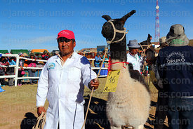 Judge poses with a winning llama during competition, Curahuara de Carangas, Bolivia
