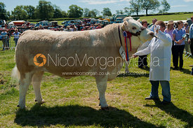 Supreme Cattle Champion, Blaston Show 2011