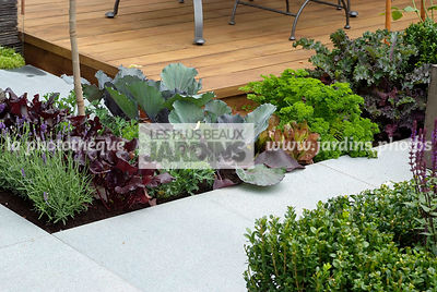 Allotment, Common lavender, garden designer, Mini potager, Mini Vegetable garden, Parsley, Pavement, Salad, Small garden, Urban garden, Vegetable patch, Vegetable plot, Wooden Terrace,