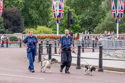 Police officers outside Buckingham Palace with Springer Spaniel sniffer dogs