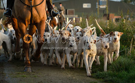 Cottesmore Hounds leaving the meet - The Cottesmore Hunt at the kennels 21/10