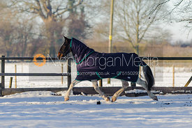 Equestrian stock images of horses and horse rugs in the snow