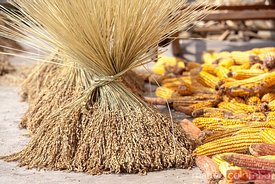 RIce and corn drying outdoors, China