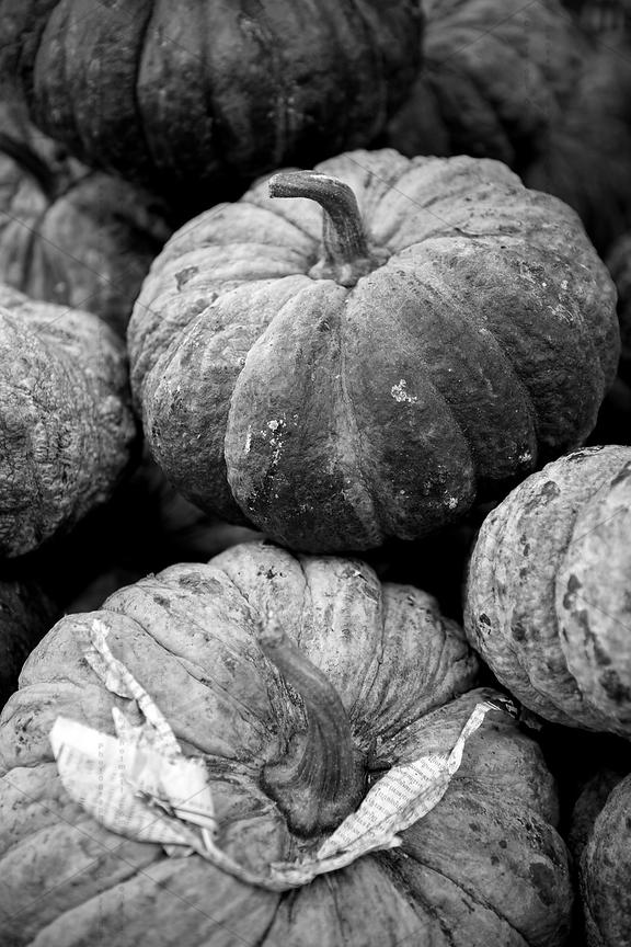 Asian pumkin photo gallery