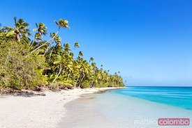 Beautiful exotic sandy beach with palm trees, Fiji