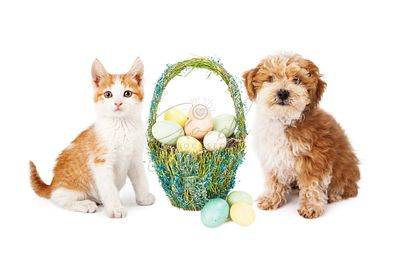 Easter Puppy Dog and Kitten