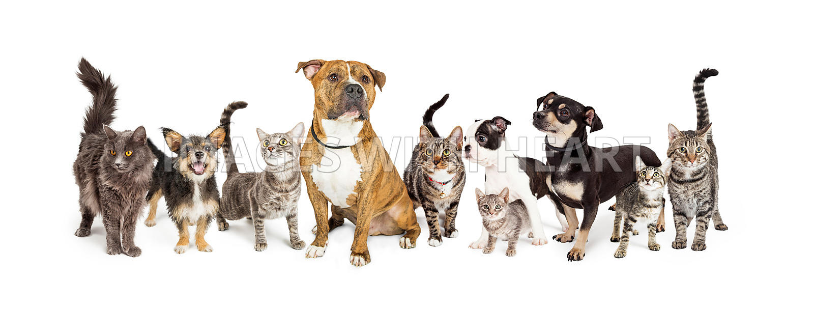 DOGS + CATS photos