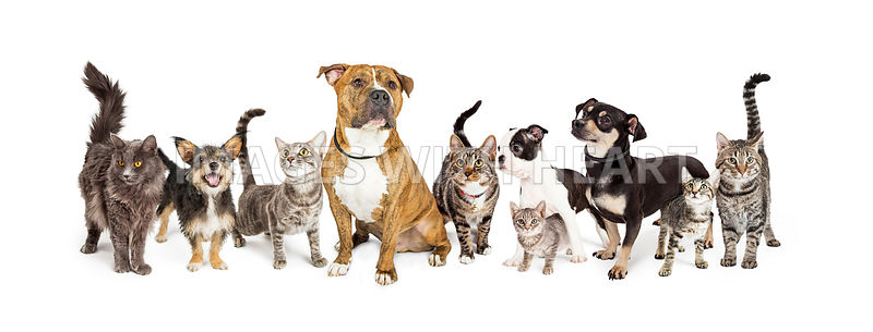Row of Cats and Dogs Together on White