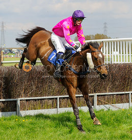 LOOKING GLASS (Harry Thorpe-Codman) - Race 4 Restricted - South Notts Point-to-Point 2017