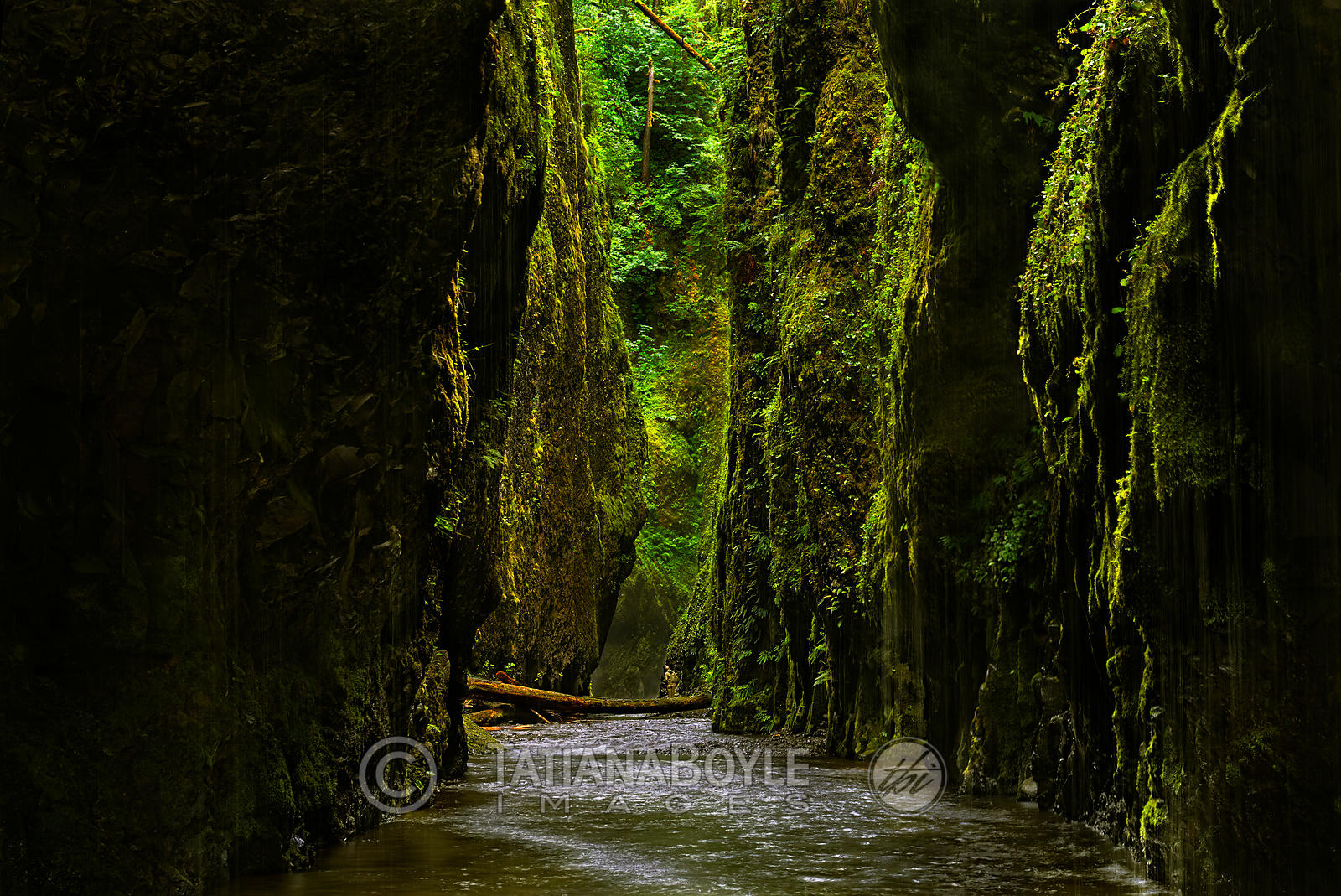 Oneonta Gorge in Columbia River Gorge National Scenic Area; Oregon