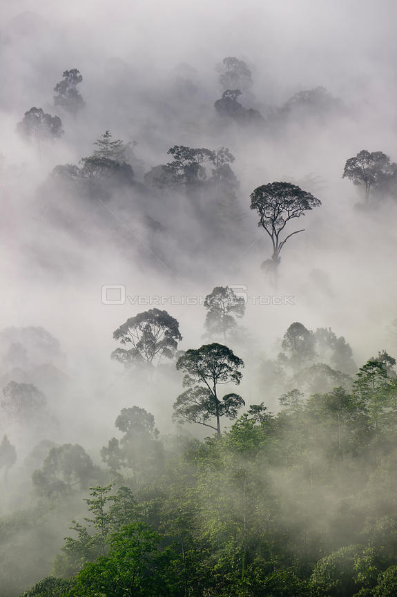Mist and low cloud hanging over lowland rainforest in the heart of Maliau Basin, Sabah's 'Lost World'. Near Lobah Camp, Maliau Basin, Borneo.
