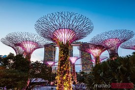 Supertree grove at night, Gardens by the Bay, Singapore