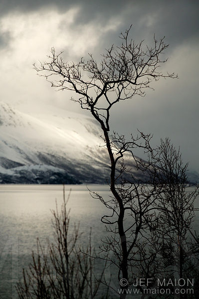 Clouds and sun over snow-capped mountains and fjord