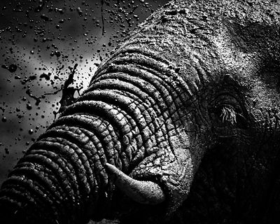 9144-Elephant_South_Africa_2008_Laurent_Baheux