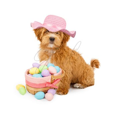 Fluffy Puppy Wearing Easter Bonnet With Basket