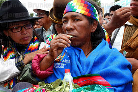 Afro Bolivian woman chewing coca leaves ( Erythroxylum coca ) at an event to celebrate Bolivia rejoining the 1961 UN Convention , La Paz , Bolivia