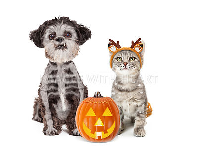 Cute Halloween Dog and Kitten in Costumes