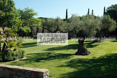 La phototh que les plus beaux jardins piscine dans un for Conception jardin mediterraneen