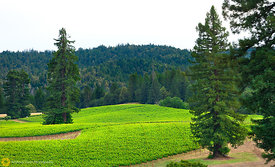 Vineyards, Anderson Valley #1