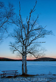 Tree on Frozen Lake Colby