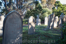 Headstones on the isle of the Dead, Port Arthur, Tasmania, Australia; Landscape