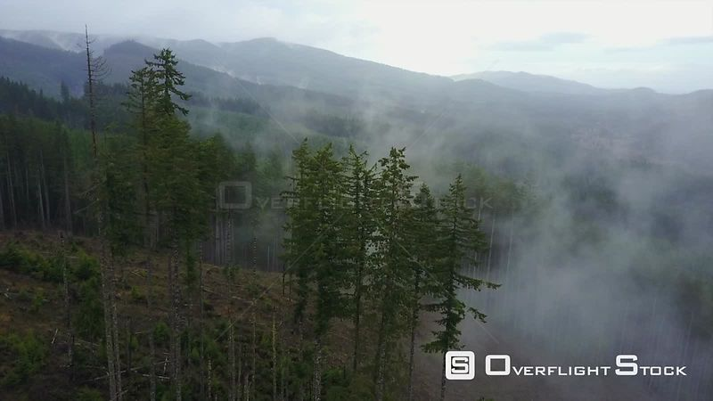 Forestry Logging and Tree Planting in Washington State USA