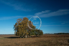 20131110-115418-New_Forest-3683