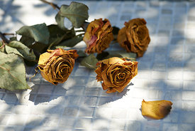 Dried roses on a marble bottom.