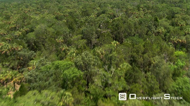 Flight over extensive Florida forest