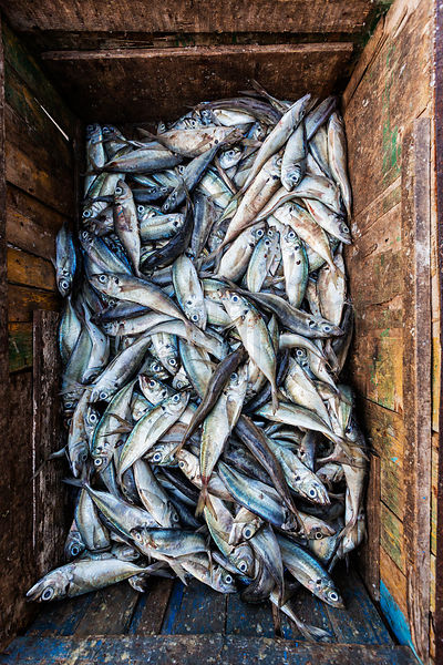 Barrow Full of Fish