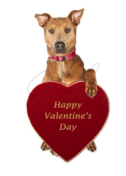Cute Dog Holding Valentines Day Candy Heart Box