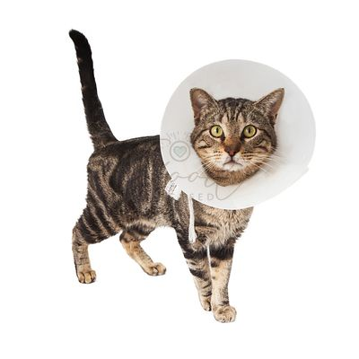 Cat wearing medical cone