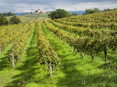 San_Gimignano_Vineyard_02