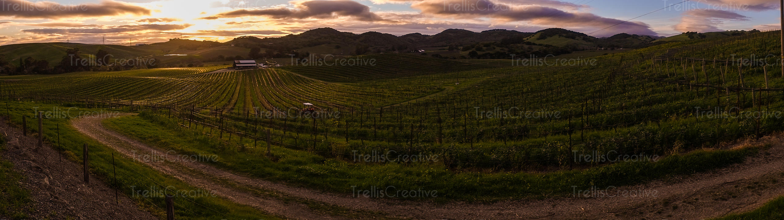 Panoramic view of a dramatic sunset over a Carneros vineyard