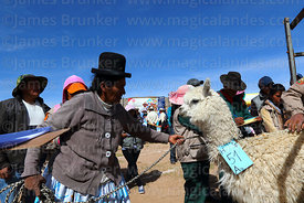Aymara woman leading her alpaca out of the weighing cage, Curahuara de Carangas, Bolivia