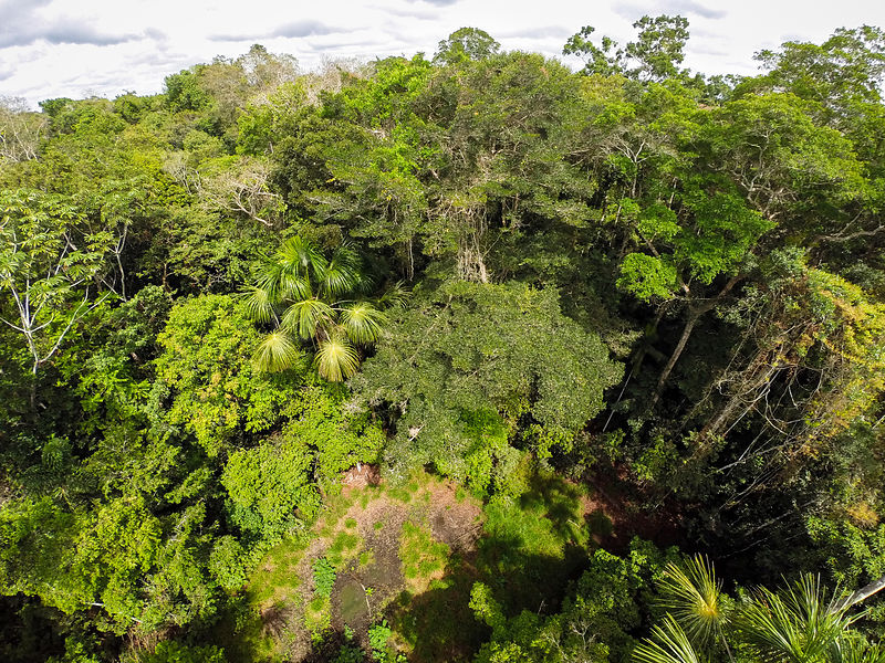 Lowland rainforest landscape viewed from above the canopy, Panguana Reserve, Huanuco province, Amazon basin, Peru.