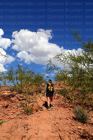 Hiking through Parkinsonia praecox / Cercidium praecox bushes near Villa Abecia, Sud Cinti, Chuquisaca Department, Bolivia