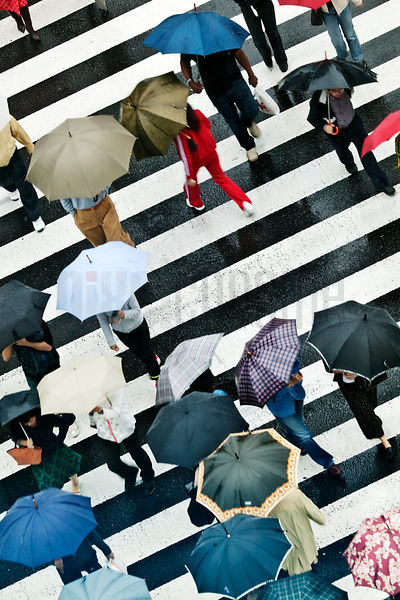 People Carrying Umbrellas at Crosswalk