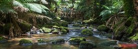 RIver in temperate rainforest of Tasmania Australia