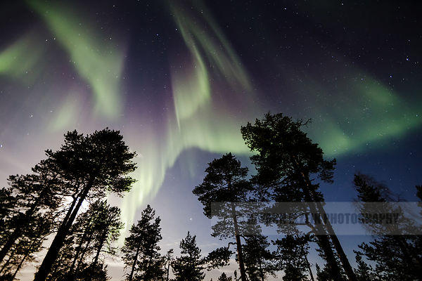 Moonshine, Aurora, and silhouette trees
