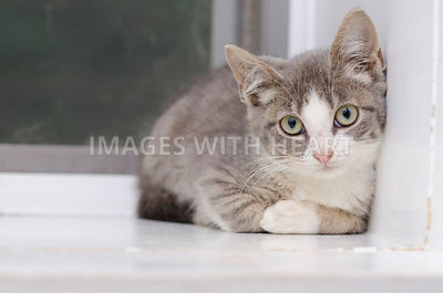 Kitten lying down looking at camera