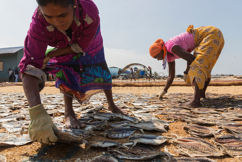 Women Turning Over Fish During the Drying Process