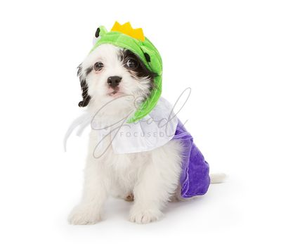 Puppy Wearing Frog Prince Costume
