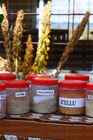 Display of seeds of different varieties of quinoa plants (Chenopodium quinoa) in UMSA University Agronomy Faculty, Patacamaya, Bolivia