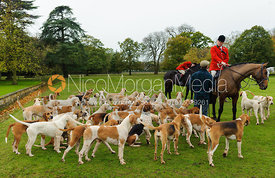 Huntsman George Adams with hounds in front of Milton Hall - Fitzwilliam Opening Meet, Milton Park 6-11-13