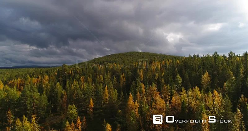 Autumn Color Forrest, Aerial Rising View Over Colorful Autumn Trees, Towards a Tunturi Fjeld Mountain, on a Sunny and Rainy Fall Day, Near Pallasyllas National Park, Lapland, Finland
