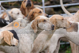 The Kimblewick Hounds