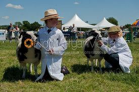 Sheep being shown by young child handlers at the Blaston Show in England
